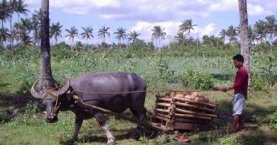 フィリピンでの田舎暮らしってどうなの?