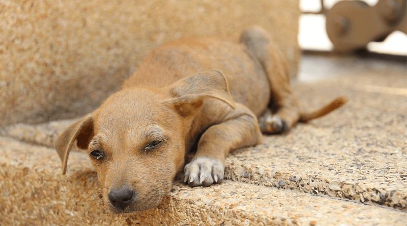 フィリピンで狂犬病感染、30代男性が日本帰国後死亡