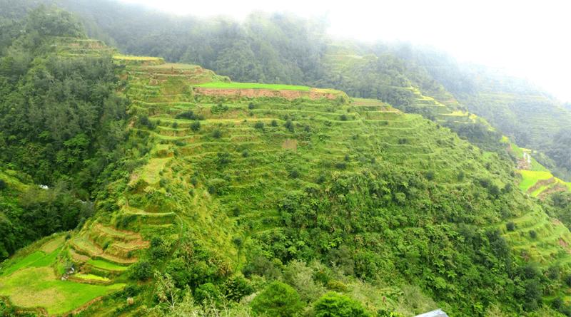 「天国への階段」と呼ばれるフィリピン世界遺産コルディリェーラの棚田群