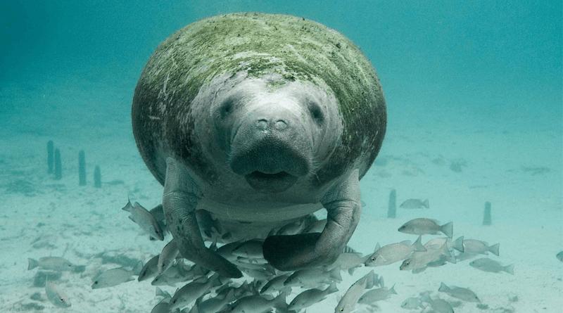 野生のジュゴンと一緒に泳ぐ貴重な体験